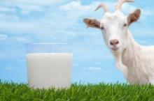 5 คุณประโยชน์จากนมแพะ กินแล้วดียังไง?