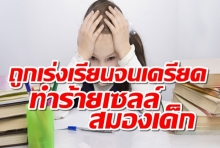 ถูกเร่งเรียนจนเครียด_ทำร้ายเซลล์สมองเด็ก